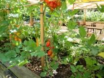 Pomodorini rossi, gialli, pomodori, zucchine, fragole, basilico...